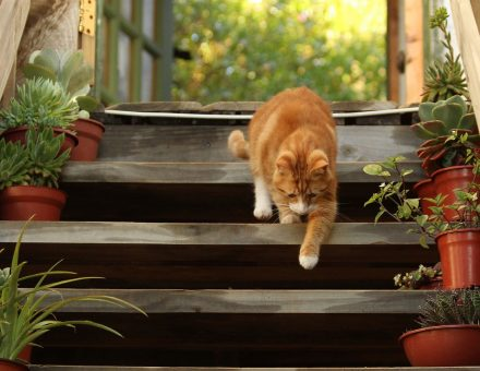 cat walking down the deck stairs