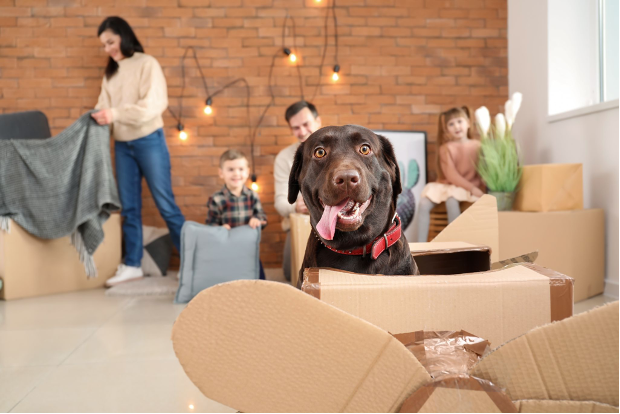 Family packing house while dog sits in box